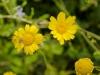 san Galgano fiori