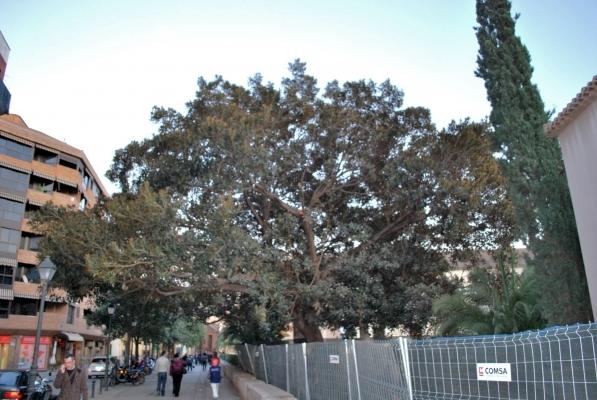 un albero immenso