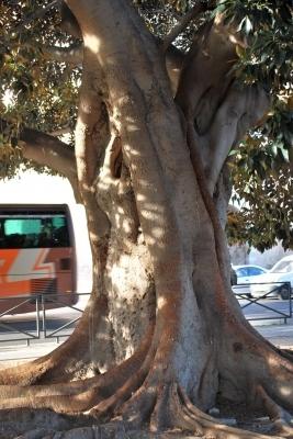 tronco colossale
