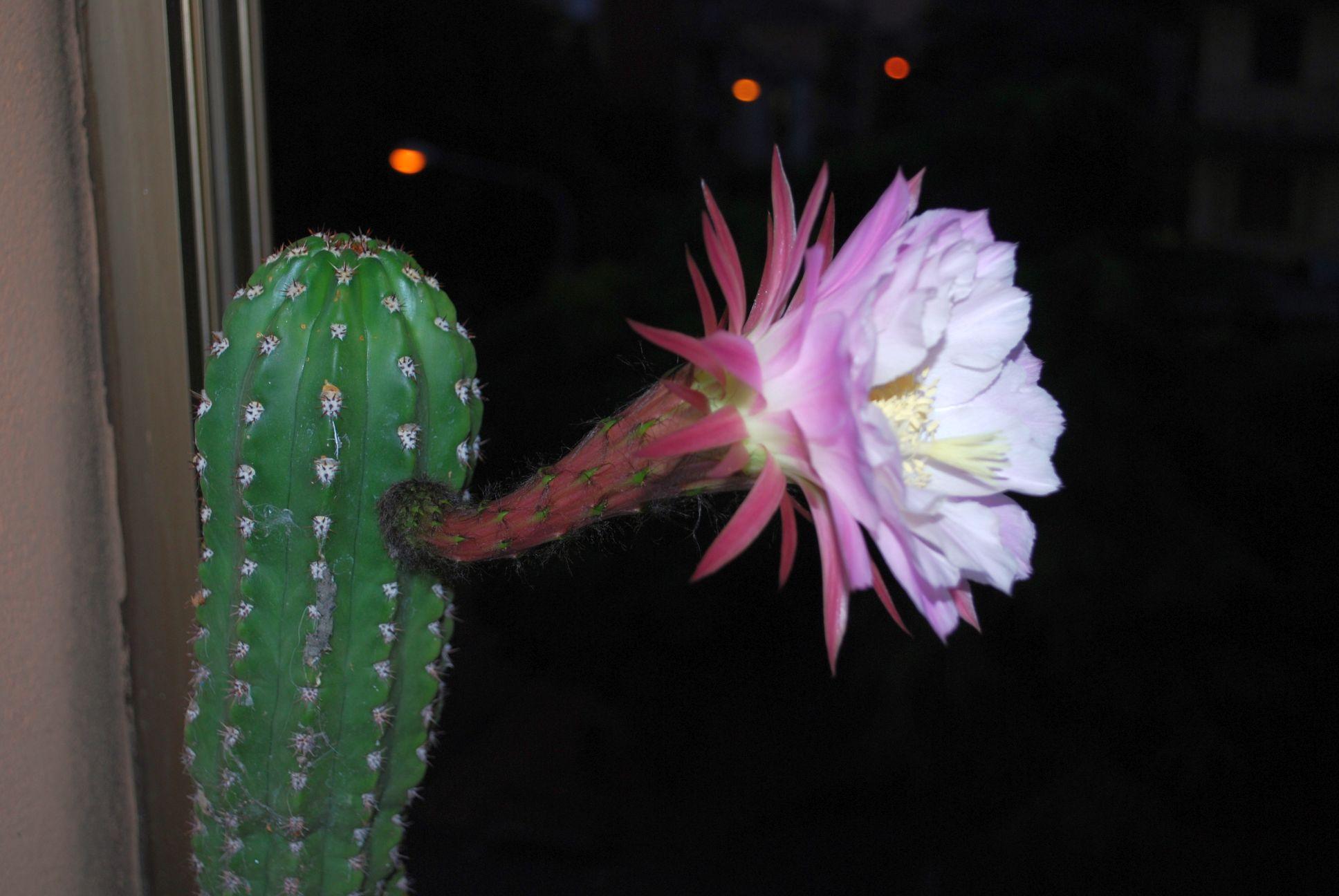primo fiore di casa mia