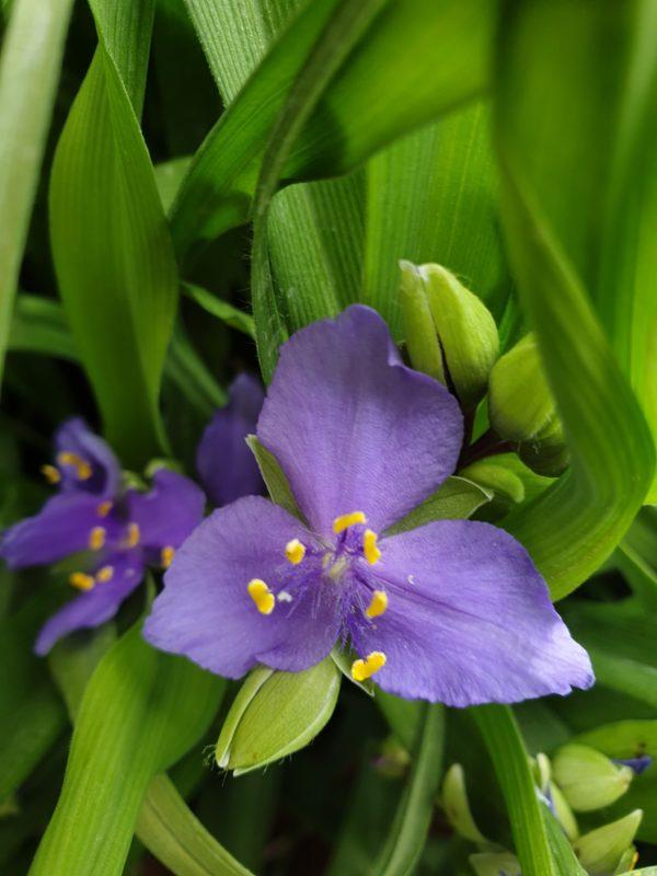 fiore ignoto
